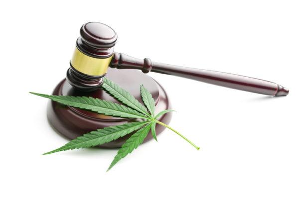 judge's gavel with a cannabis leaf